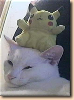 [A cat with a pokemon on his head]